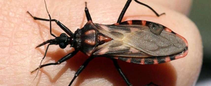 Docente de Medicina publicó investigación que busca el camino a la cura de la Enfermedad de Chagas
